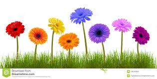 Spring Promotion Gaia Organics